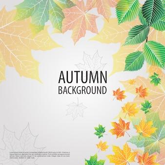 Fondo di autunno del ramo di albero
