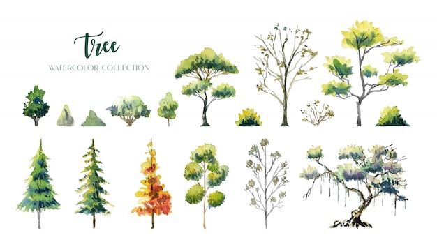 Collezione di pittura ad acquarello di alberi e cespugli.
