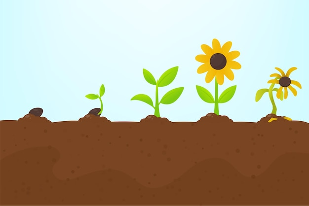 Crescita degli alberi. piantare un albero che è germogliato dal seme diventa una piantina con fiori e muore.