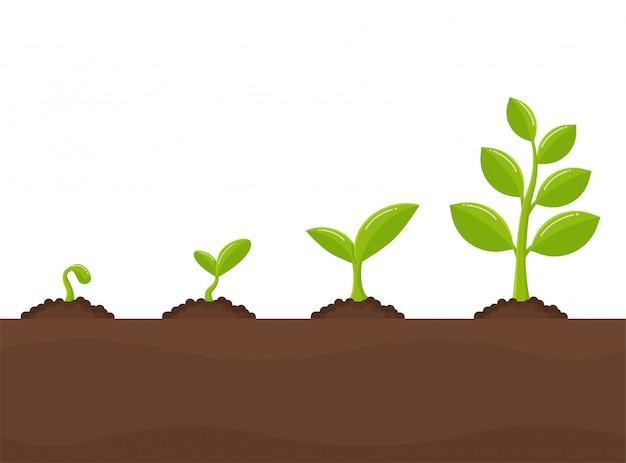 Crescita degli alberi piantare alberi che spuntano dai semi diventa una grande piantina.