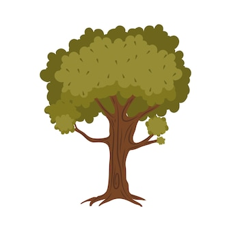 Natura della pianta dell'albero