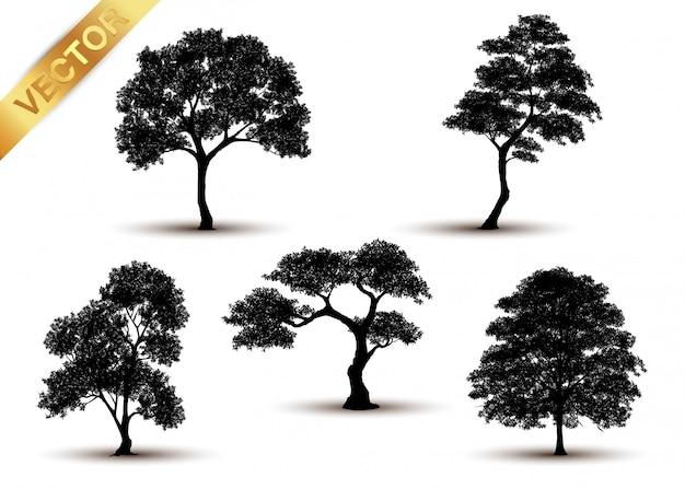 Sagoma albero isolato su sfondo bianco.