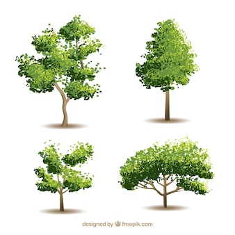 Collezione di alberi con stile realistico