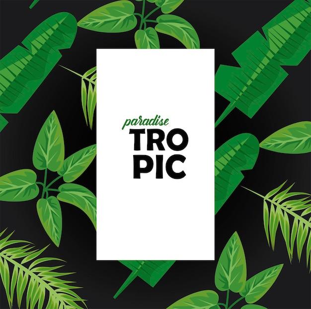 Parola tropic in cornice quadrata con foglie piante verde natura poster