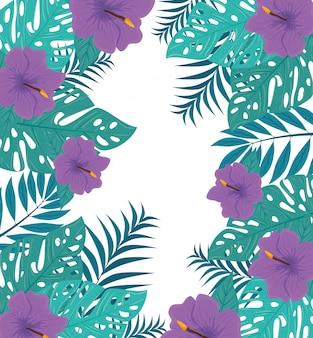 Sfondo tropicale con fiori di colore viola e piante tropicali, decorazione con fiori e foglie tropicali