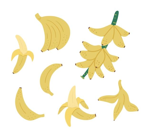 Clipart di frutta, grappolo e ramoscello di banana tropicale