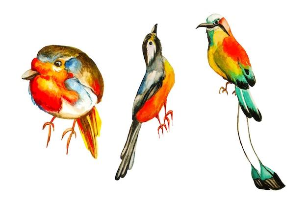 Insieme di uccelli tropicali.