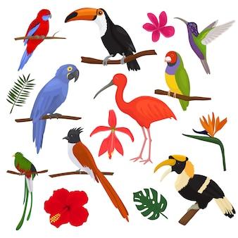 Uccelli tropicali vettore pappagallo esotico tucano e colibrì con foglie di palma illustrazione set di moda birdie ibis o bucero in fioritura tropicale isolato su bianco