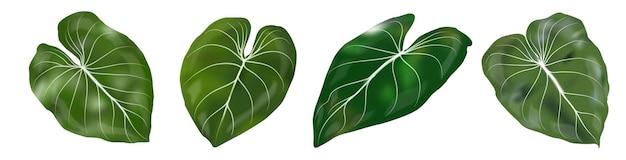 La decorazione tropicale lascia l'insieme isolato su fondo bianco. illustrazione vettoriale