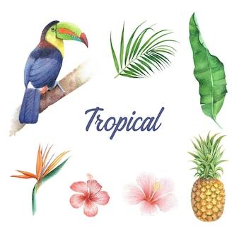 Design tropicale con fogliame e uccelli, illustrazione vettoriale.