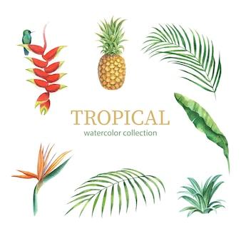 Design tropicale con fogliame e fiori, illustrazione vettoriale.