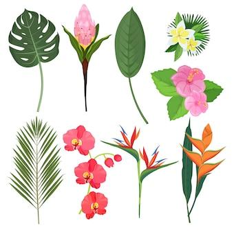 Fiori tropicali. mazzi di erbe esotiche decorazione bali polinesiana piante fiori. pianta del fiore dell'illustrazione, illustrazione colorata fogliame esotico floreale