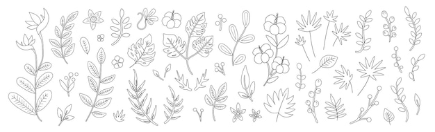 Fiori tropicali foglie e ramoscelli delinea illustrazione. piante esotiche piatte disegnate a mano schizzo estate verde design