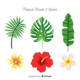 Fiori e foglie tropicali