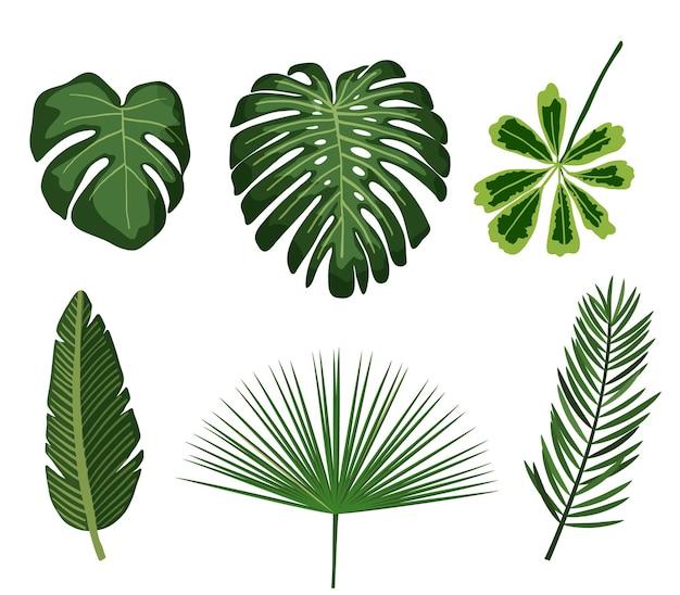 Foglie tropicali palma botanica foglia tropicale set fogliame pianta estiva giungla esotica verde elementi di design
