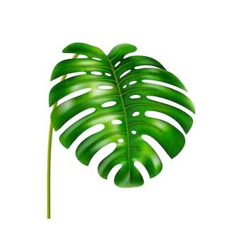 Foglie tropicali che appendono foglia di monstera con fori