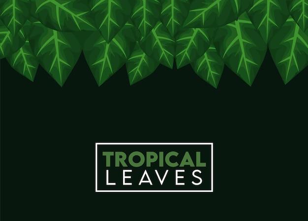 Iscrizione di foglie tropicali con foglie in cornice quadrata