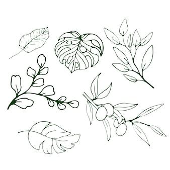 Foglie e olive tropicali. illustrazione vettoriale isolato sfondo.