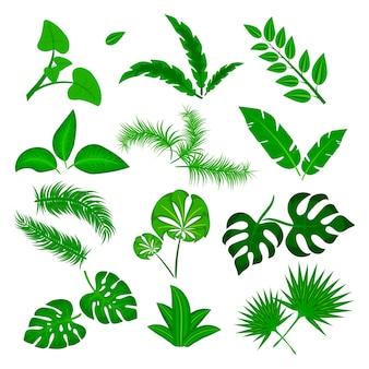 Insieme di vettore di foglie tropicali isolato su priorità bassa bianca. collezione di foglie verdi diverse. flora della foresta della giungla. banana e foglie di palma esotiche in un piatto stile cartone animato illustrazione