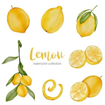 Collezione di acquerelli di limone tropicale con frutta e foglia con ramo