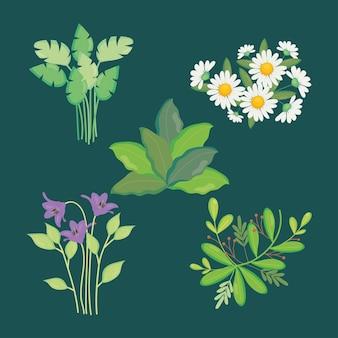Monstera tropicale foglie e fiori impostati su sfondo verde, colorato, illustrazione