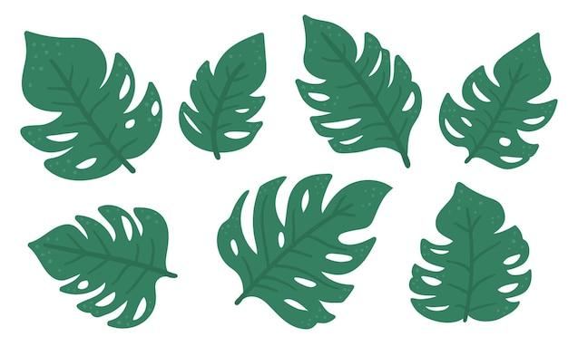 Set di foglie di monstera tropicale