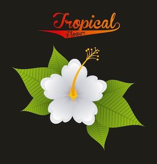 Natura tropicale