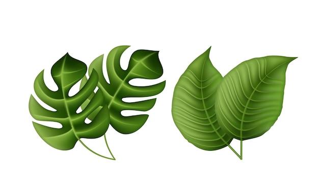 Foglie di palma tropicale, foglie della giungla.