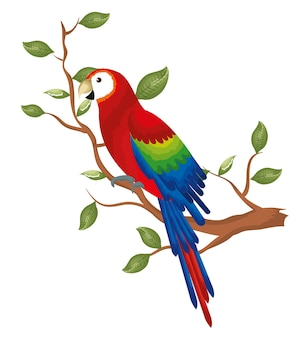 Pappagallo tropicale nell'albero del ramo