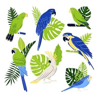 Set di pappagalli tropicali collezione di uccelli macaw cockatoo budgerigar ecc