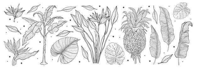 Insieme della natura della pianta tropicale insieme disegnato a mano di arte di linea. palm tree giungla floreale. illustrazione.