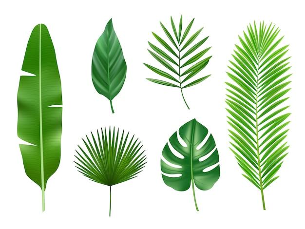 Piante tropicali. raccolta realistica di vettore esotico delle foglie verdi della natura di eco isolata