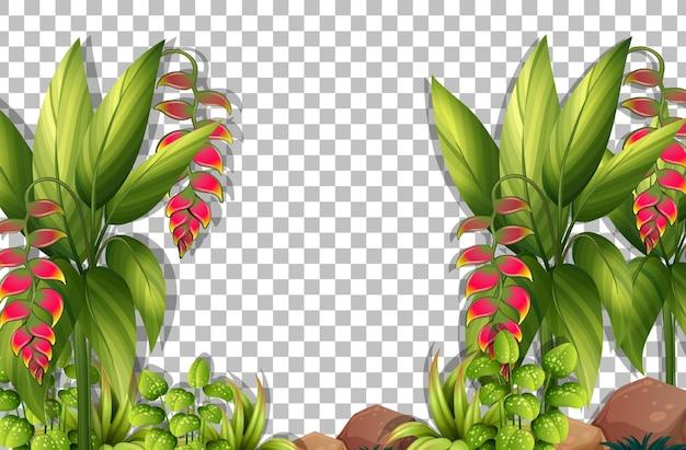Piante e foglie tropicali su sfondo trasparente