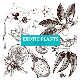 Insieme di schizzo di piante tropicali abbozzato a mano fiori esotici, frutti, illustrazioni di piante