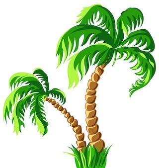 Due palme tropicali isolate su un fondo bianco