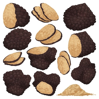 Illustrazione del tartufo su sfondo bianco. fumetto imposta icona fungo. cartone animato imposta icona tartufo.