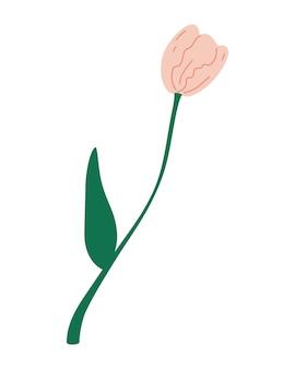 Tulipano. bel fiore. progettazione grafica della cartolina per la giornata internazionale della donna