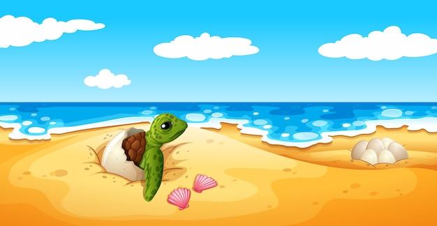 Le uova di tartaruga si schiudono sulla sabbia