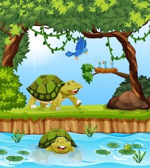 Tartaruga nella giungla