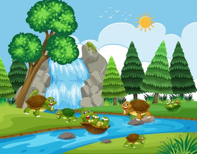 Tartaruga che gioca nel fiume