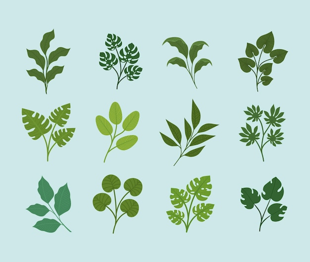 Disegno a dodici foglie