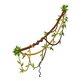 Banner di rami di liane selvatiche contorto. piante di vite della giungla. foresta tropicale tropicale legnosa