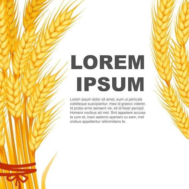 Due mazzi di banner di grano design con posto per il testo piatto illustrazione vettoriale su sfondo bianco.