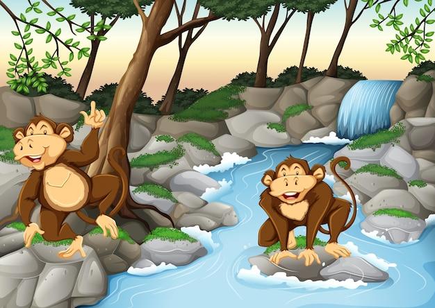 Due scimmie che vivono vicino alla cascata