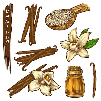 Elementi di schizzo di vaniglia icone di erbe o spezie
