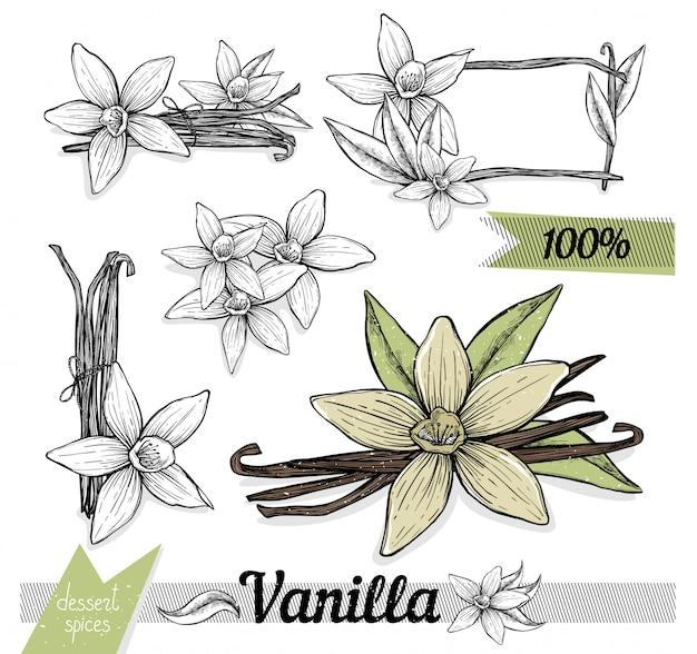 Bastoncini di vaniglia con fiori su sfondi bianchi.