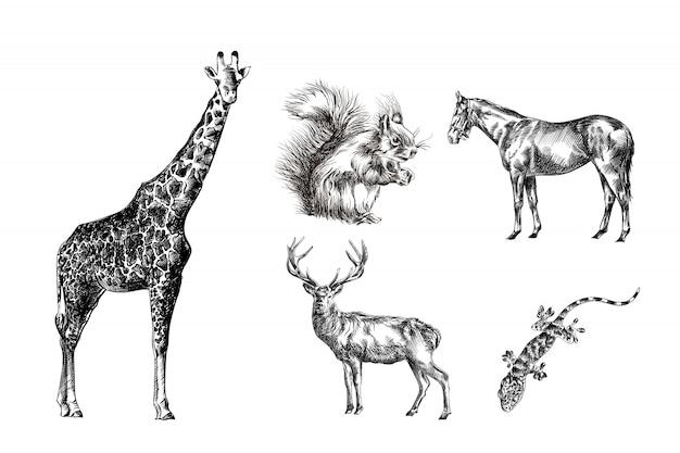Vari animali disegnati a mano schizzi giraffa, cavallo, geco, scoiattolo, cervo