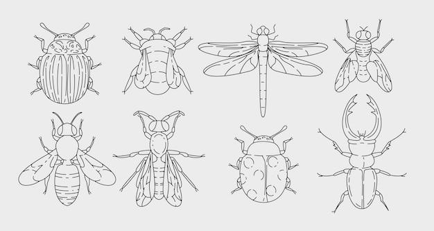 Vari insetti incastonati nel disegno del contorno