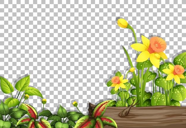Varie piante tropicali su sfondo trasparente
