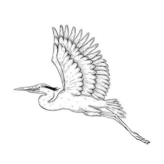 Illustrazione artistica vettoriale realizzata a mano con penna e inchiostro un airone in volo